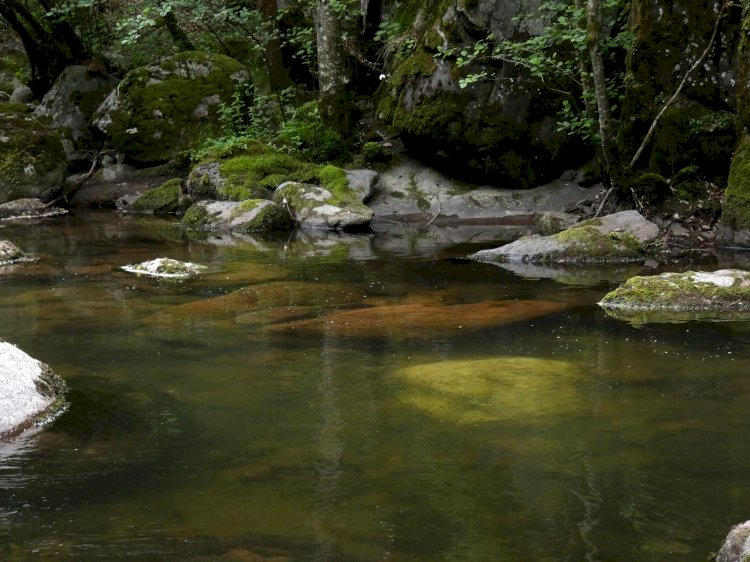 Долината на дивата девинска река