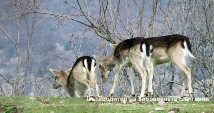 Една красива фотоколекция от сърни, елени, лисици и …още нещо