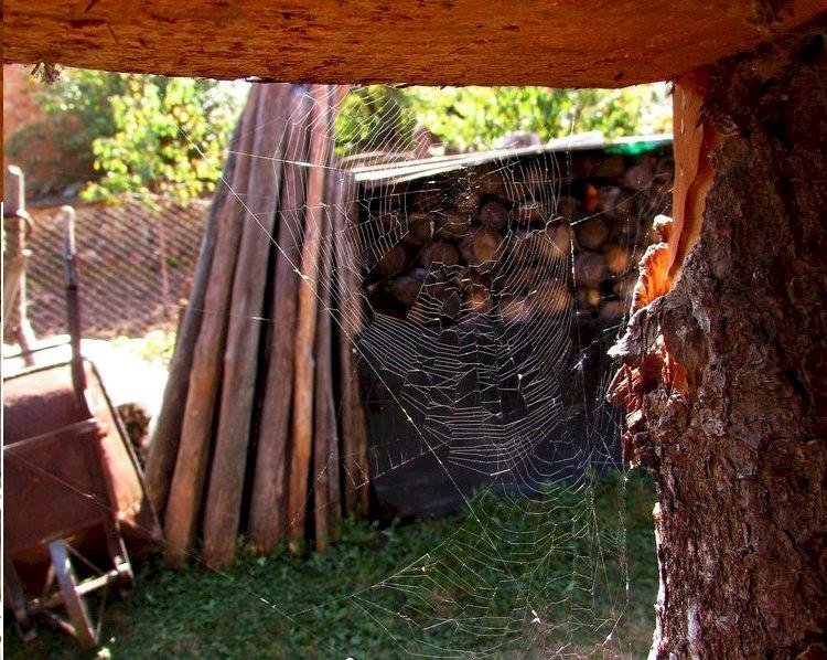 Шуляница - бродещите сенки от миналото