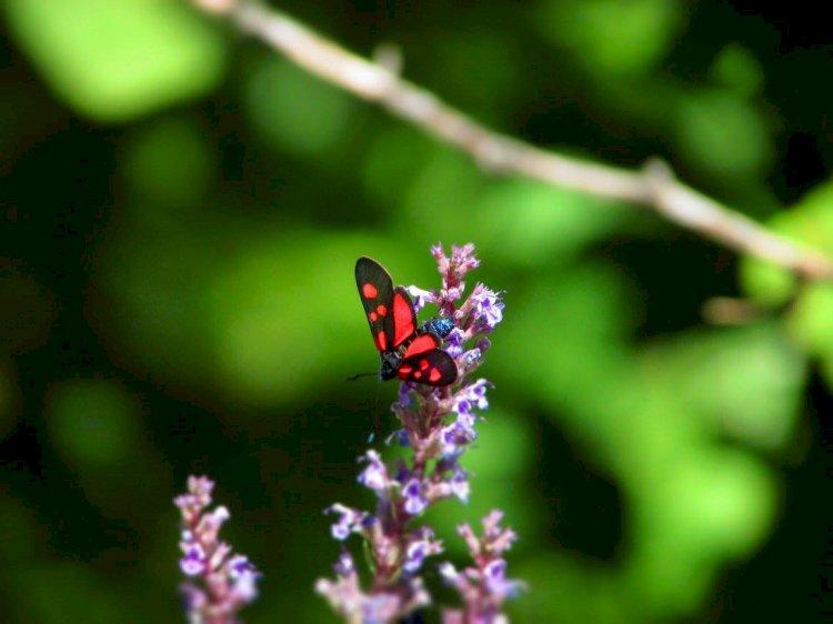 Вълшебни места в Западните Родопи: Кралството на пеперудите