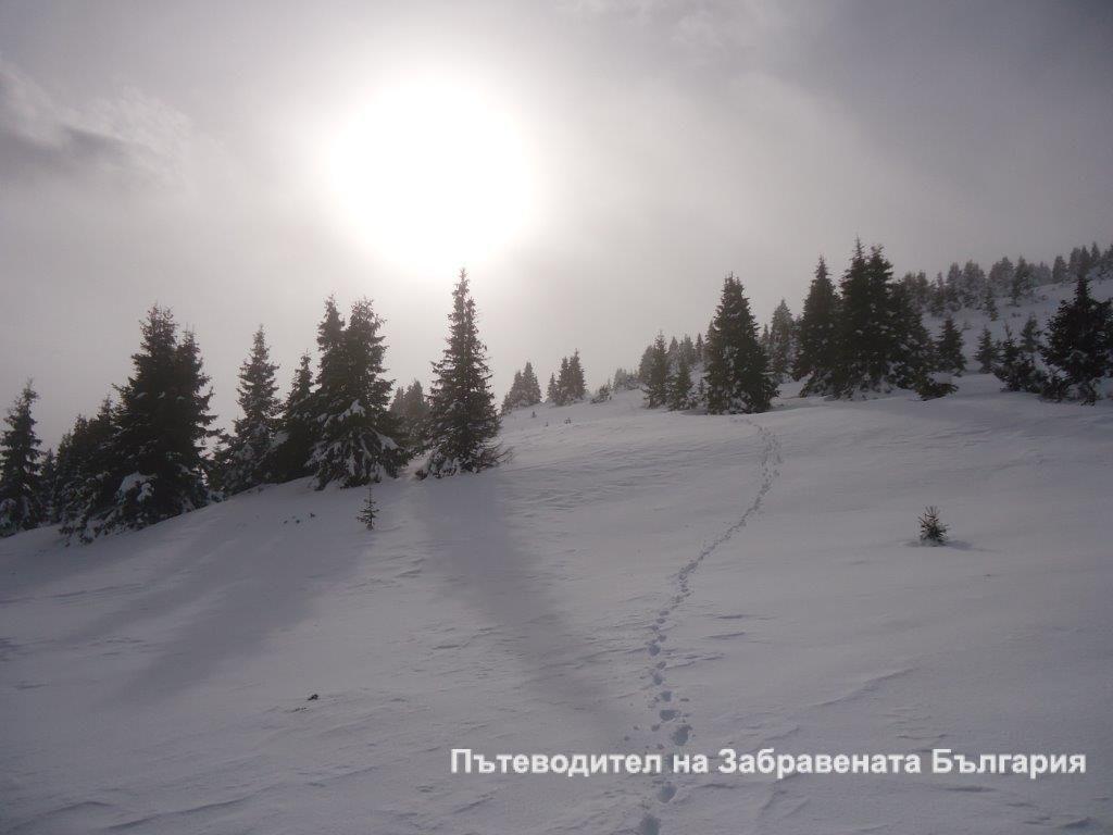 Нормална за високите планини зимна виелица, към вр. Шабалиева каба, с. Гела
