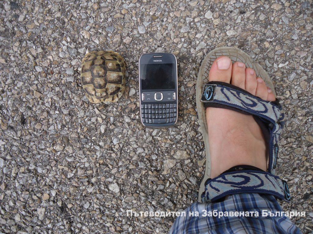 Костенурката - пътешественик във времето