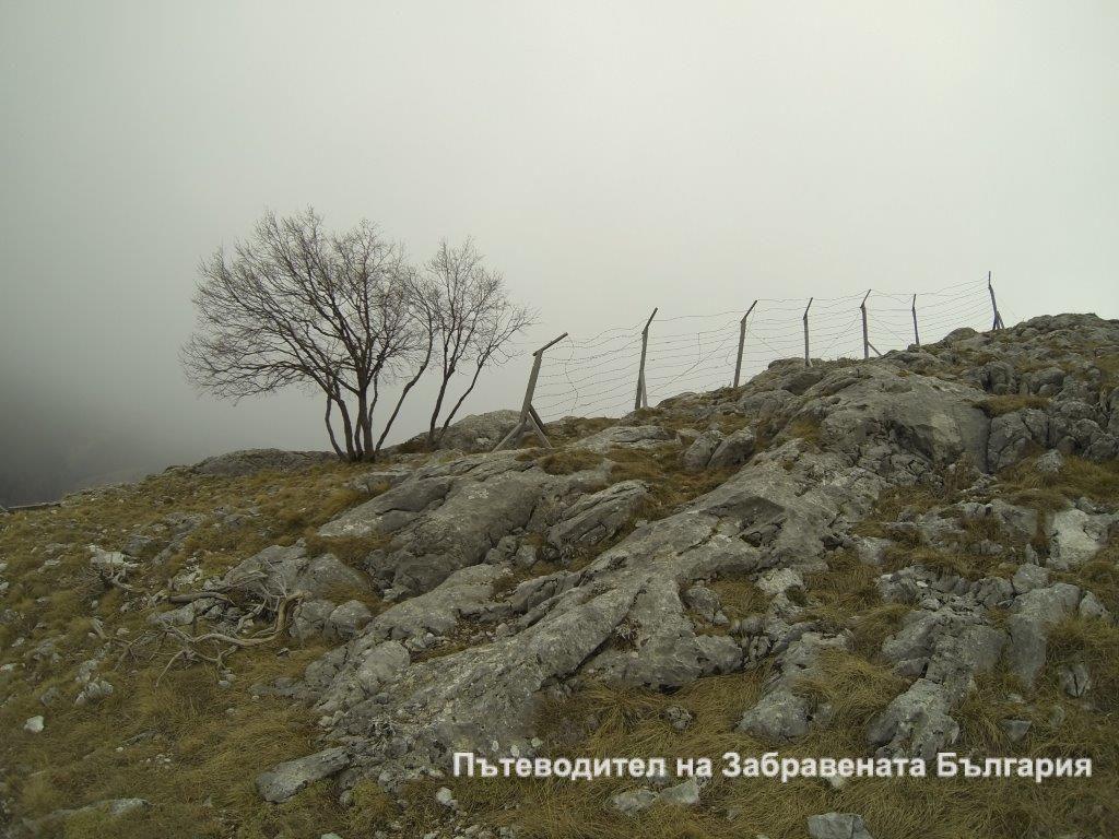 Самота край кльона. Вятърът разнася мъглите на 1700 м. надм. вис.
