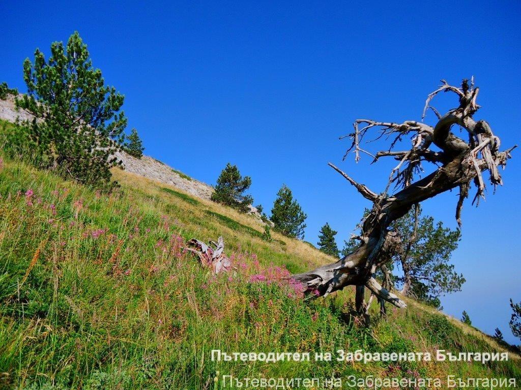 Гората на мълниите в Славянка планина